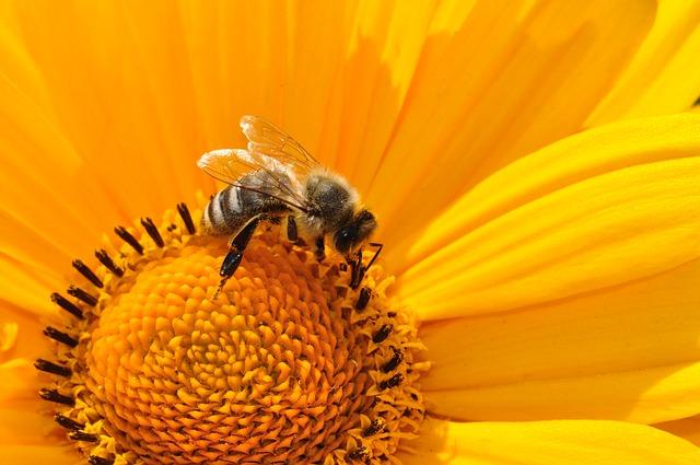 2663871dba1ebee4_640_bee-pollen