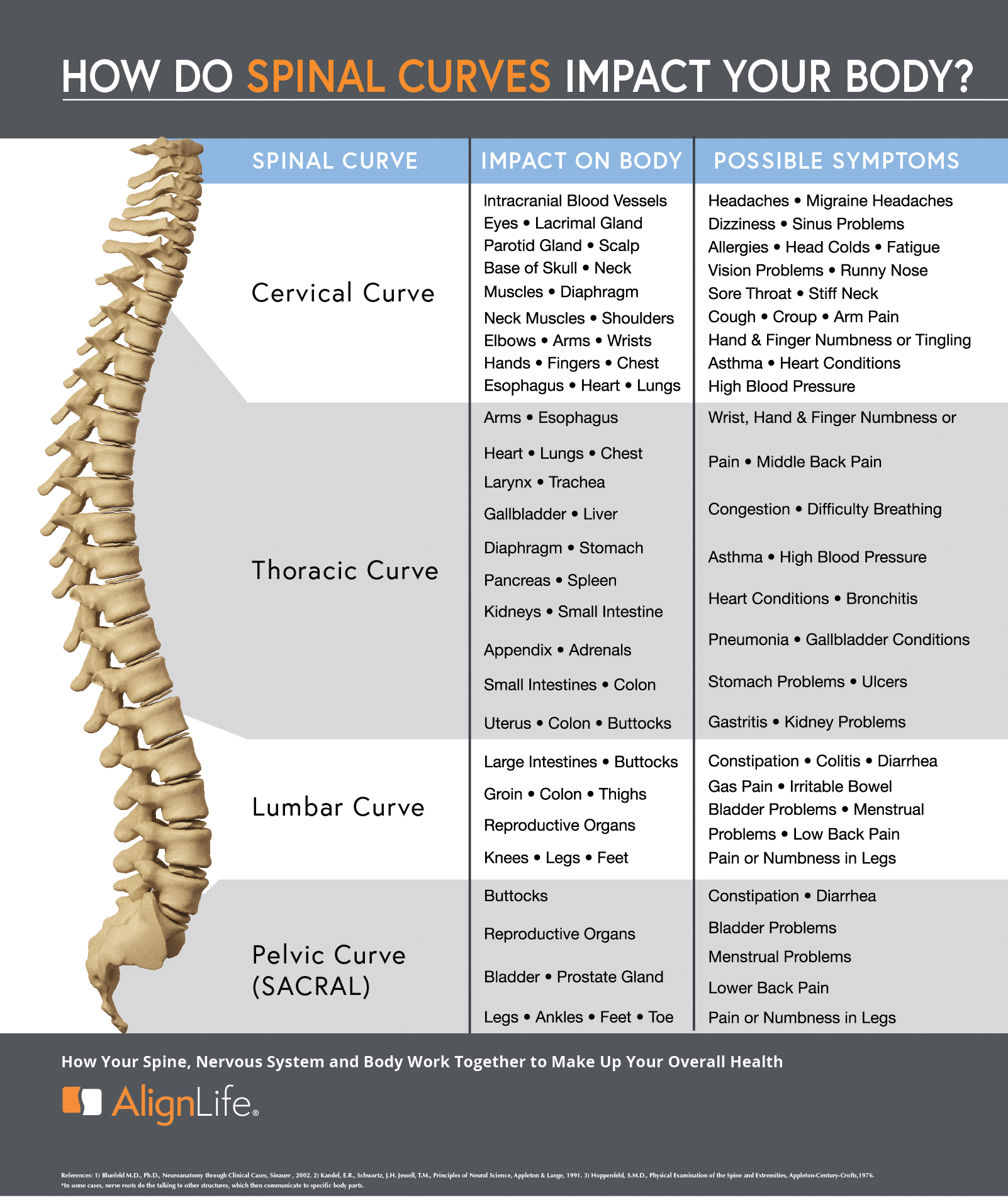spinal curves and function