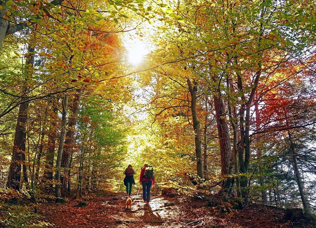 walking or hiking in the autumn forest