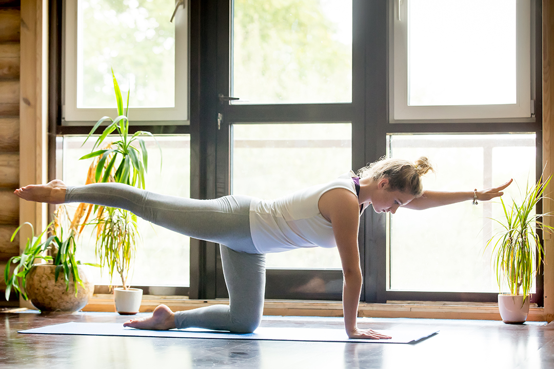 bird dog pose for low back pain relief